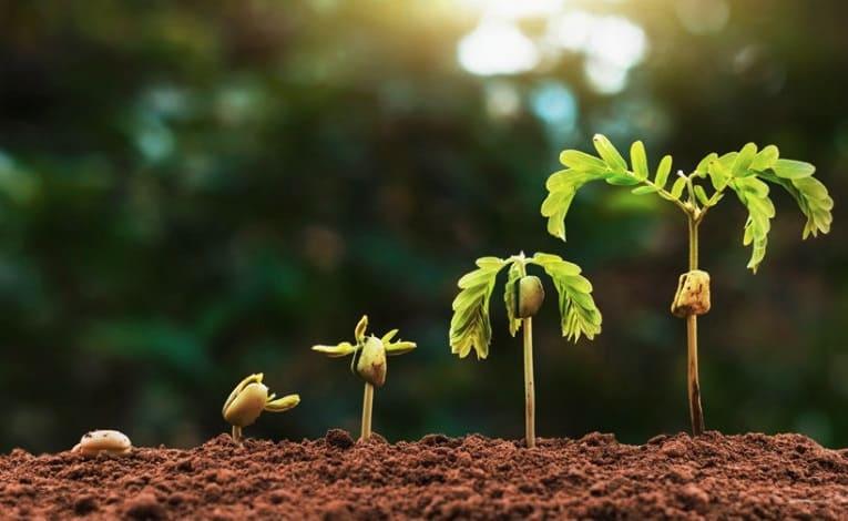 Un material inteligente de construcción crece como las plantas y ...